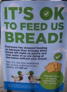 Feeding Bread to Ducks